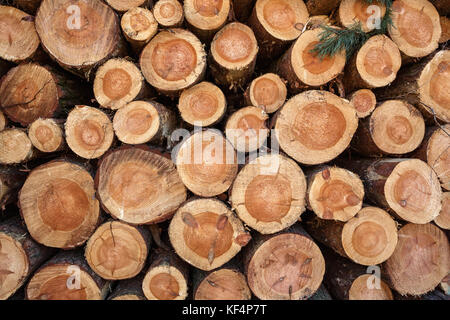Stack of tree trunks - Stock Photo