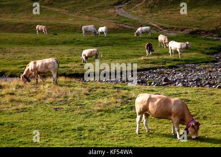 France, Nouvelle Aquitaine, Pyrenees atlantiques department (64), Bearn country, Pyrenees National Park near Pourtalet - Stock Photo