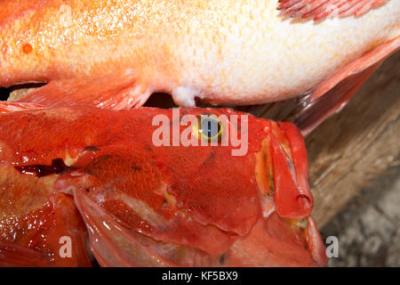Close-up view of freshly caught red snapper lying on wood - Stock Photo