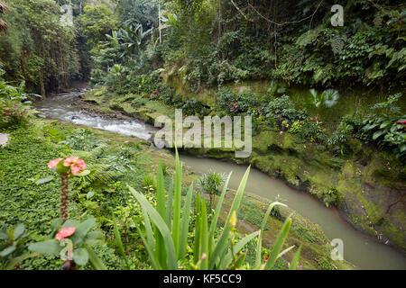 Small river running through rainforest near Hotel Tjampuhan Spa. Ubud, Bali, Indonesia. - Stock Photo
