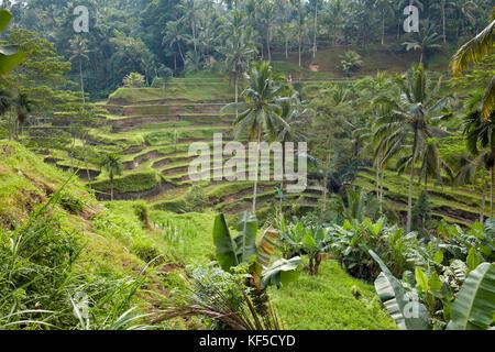 Tegalalang Rice Terrace. Tegalalang village, Bali, Indonesia. - Stock Photo