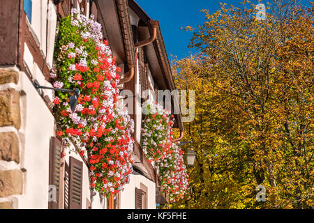 Flowers on the facade of a traditional half-timbered house in Saint-Hippolyte village - Haut-Rhin, France - Stock Photo