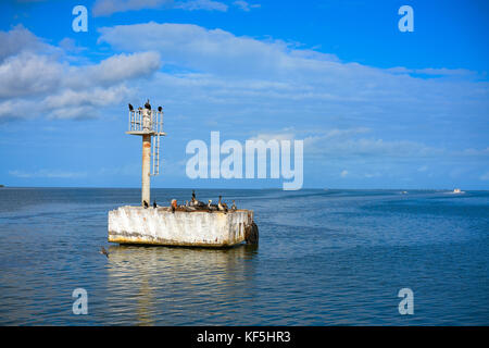 Chiquila port sea gulls and Pelicans in Quintana Roo Mexico - Stock Photo