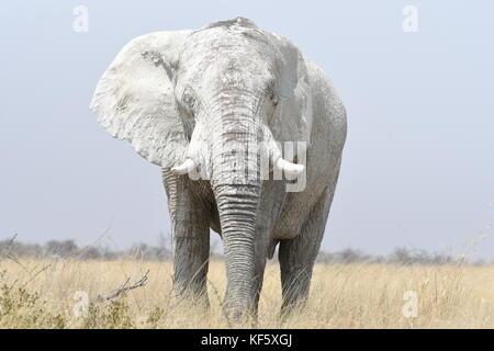 Safari at Etosha, Namibia - Stock Photo