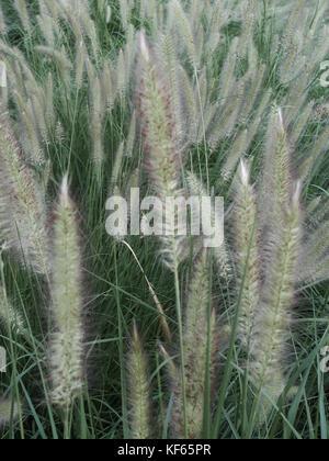 close up of ornamental grasses in a garden