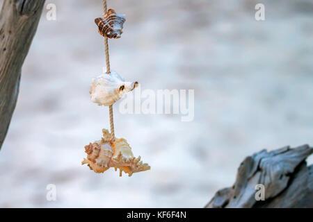 Seashells hanging on rope interior decoration - Stock Photo