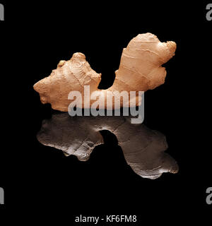 One fresh not peeled ginger root isolated on black glossy background with real reflection.. Side view. - Stock Photo