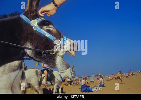 Traditional donkey rides on Skegness beach, Lincolnshire, England, UK - Stock Photo