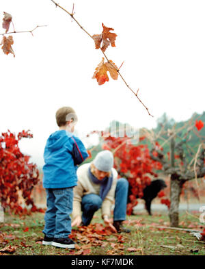 USA, California, boy standing and woman gathering autumn leaves in a vineyard, Calistoga - Stock Photo