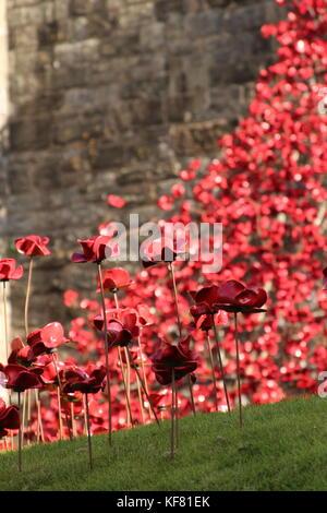 Weep window installation at Caerarfon castle Wales, display ceramic poppies war memorial - Stock Photo