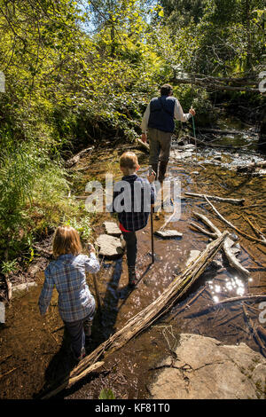 USA, Alaska, Redoubt Bay, Big River Lake, hiking on the bear trails to a near by lake - Stock Photo