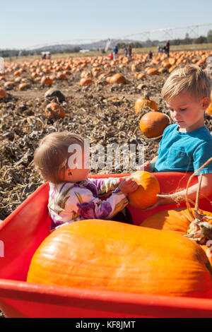 USA, Oregon, Bend, a young family chooses pumpkins at the annual pumpkin patch located in Terrebone near Smith Rock - Stock Photo