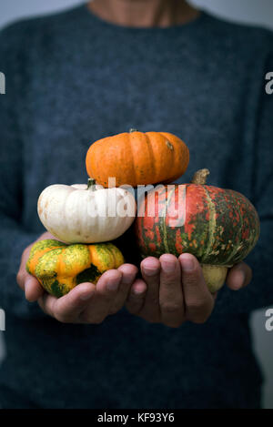 closeup of a young caucasian man with an assortment of different pumpkins in his hands - Stock Photo