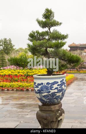 Large Bonsai tree in Hue, Vietnam - Stock Photo