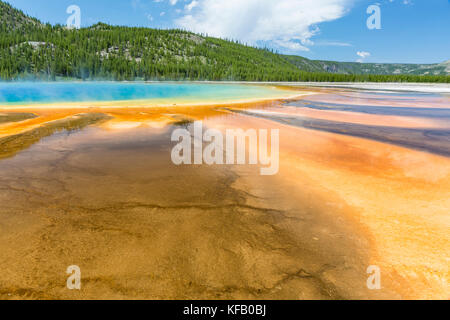 Microbial mats fan out from the vivid center of the Grand Prismatic Spring in Yellowstone National Park, Wyoming - Stock Photo