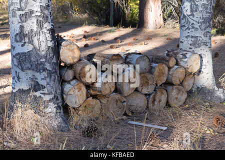 Firewood Woodpile between two trees on a forest floor - Stock Photo