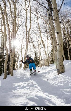 USA, Colorado, Aspen, skiing in the Aspen trees next to the Bear Paw run, Aspen Ski Resort, Ajax mountain - Stock Photo