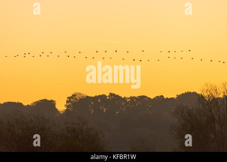 New Forest, Hampshire, UK, 27th October 2017. An early morning flight heads in the opposite direction to a flock - Stock Photo