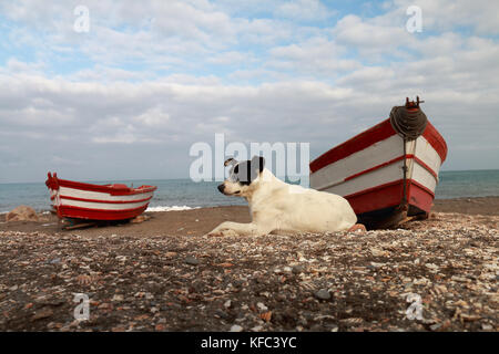Dog lying on the beach and small fishing boats stranded in the sand - Stock Photo