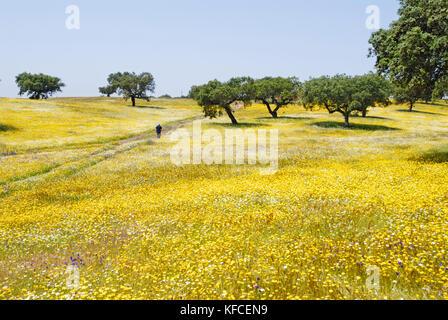 Spring in Alentejo, Portugal - Stock Photo