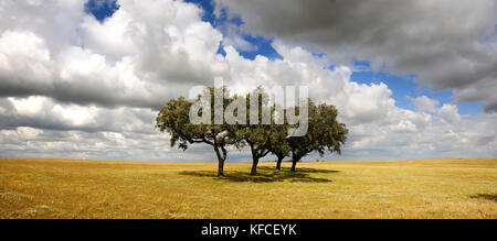 The vast plains of Alentejo with cork trees. Portugal is the world's most big producer of cork - Stock Photo
