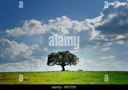 Cork tree in the vast plains of Alentejo, Portugal - Stock Photo