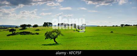 Cork trees in the vast plains of Alentejo, Portugal - Stock Photo