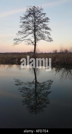Old tall tree near the river with calm water reflection at sunset - Stock Photo