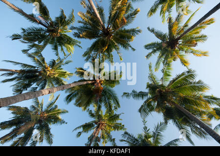 Image of Palm trees taken on Gili Air Island, Lombok, Indonesia - Stock Photo