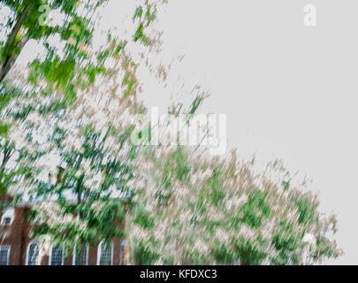 Blurred trees Dartmouth College, Hanover, New Hampshire, USA - Stock Photo