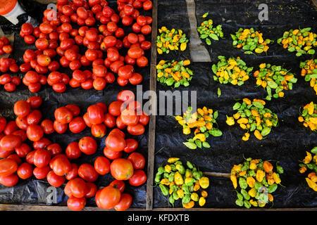 BURKINA FASO, Provinz Poni, Gaoua, market, vegetables like chillies, tomatos / Markt, Verkauf Gemuese, Tomate, Chillies - Stock Photo