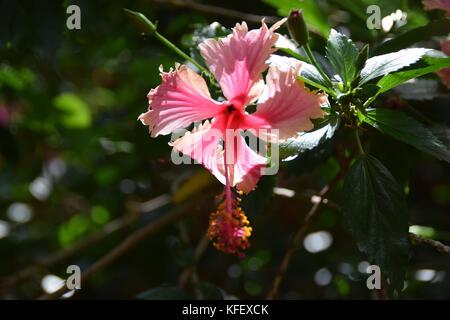 Koko Crater Botanic Garden - Oahu, Hawaii - Stock Photo