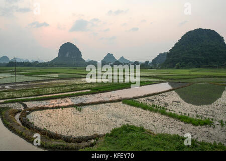 Rice fields with water near Yangshuo town during sunset, Guilin Province, China - Stock Photo
