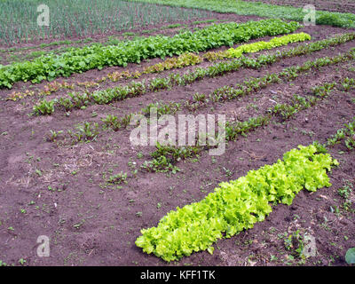 Mixed vegetable furrows in the garden on summer - Stock Photo
