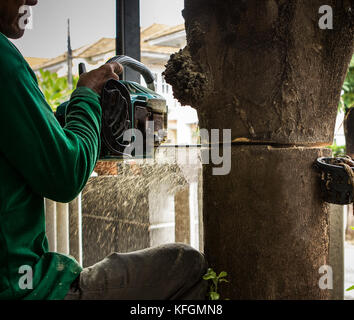 carpenter cutting bark tree by chain saw in gardening working - Stock Photo
