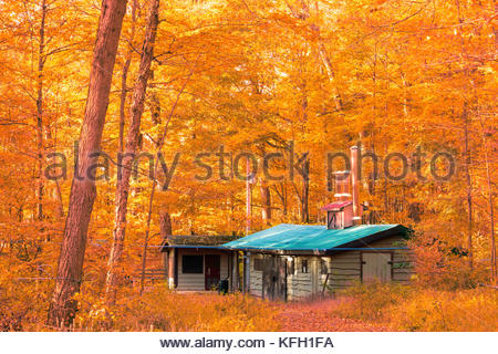 Sugar Shack for maple syrup in autumn in the maple forest of Purple Woods on the Oak Ridges Trail in Oshawa Ontario Canada