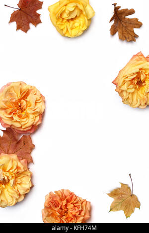 Autumn floral frame made of colorful maple and oak leaves, fading roses isolated on white background. Fall and Thanksgiving - Stock Photo