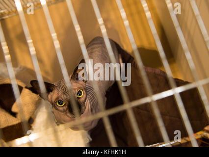Rescue Cats Pedigree Birmingham