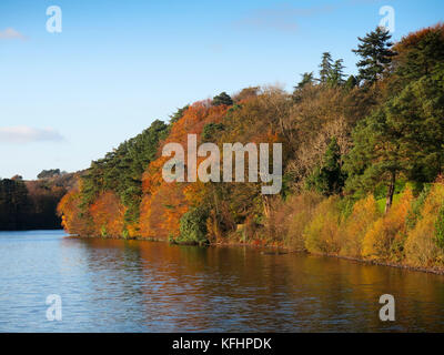 Milngavie, Glasgow, Scotland, UK. 29th October, 2017. Lots of walkers in the Autumn sunshine at Craigmaddie Reservoir. - Stock Photo