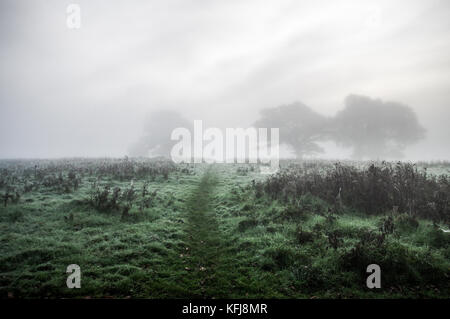 Thick autumnal fog surrounding Sussex countryside near Shipley - Stock Photo