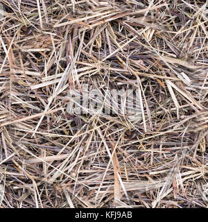 seamless dry beige hay or straw texture, background. - Stock Photo