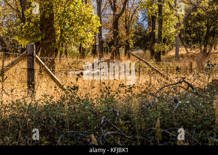 Rusted, old wood and barbed wire fence vanishing into distance, in country landscape of green shrubs in foreground, - Stock Photo