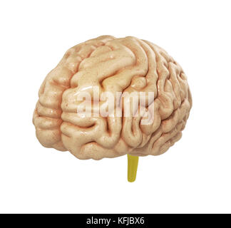 medically accurate illustration of the brain 3d render - Stock Photo