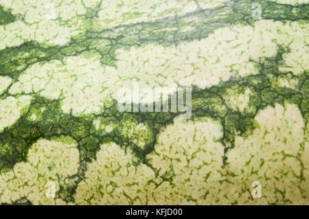 Skin of melon in the first plane filling the whole setting with dark forms in horizontal image realized with lens - Stock Photo
