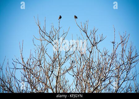 birds on the branches of trees against the sky - Stock Photo