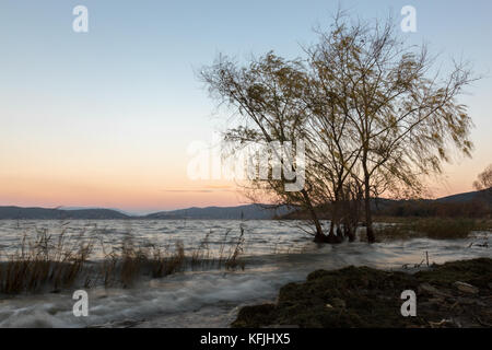 Strong wind at the lake, with blurred trees motion and waves on the water, with a clean sky with dusk colors on - Stock Photo