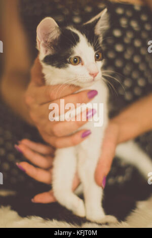 Black and white kitten with green eyes, warm toned picture - Stock Photo