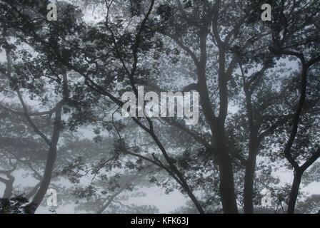 Rainforest, in the mountains southwest of Dili, Timor-Leste (East Timor) - Stock Photo