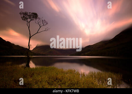 Lone tree on Buttermere Lake, Cumbria, Lake District. England. - Stock Photo