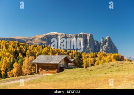 Autumnal Alpe di Siusi mountain pasture with view of the Sciliar massif, mountain hut, Sciliar, Dolomites, South - Stock Photo